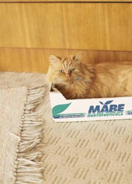 Cat in Box, Ebersdorf 2017